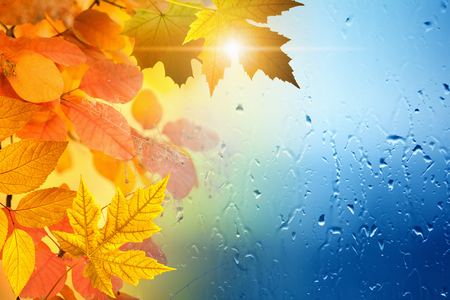 Autumn seasonal background - sun shihe through yellowand orange leaves, window glass with rain drops, season is fall