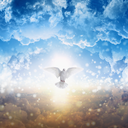 Photo pour Holy spirit bird flies in skies, bright light shines from heaven, white dove - symbol of love and peace - descends from sky - image libre de droit