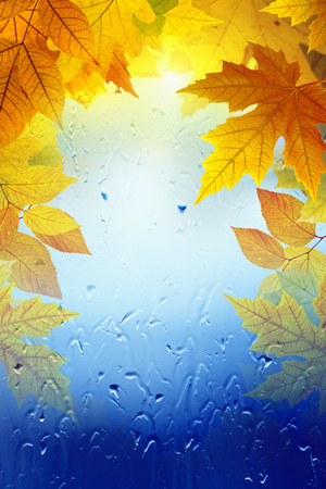 Autumn seasonal background - yellow and orange maple leaves, window glass with rain drops, season is fall