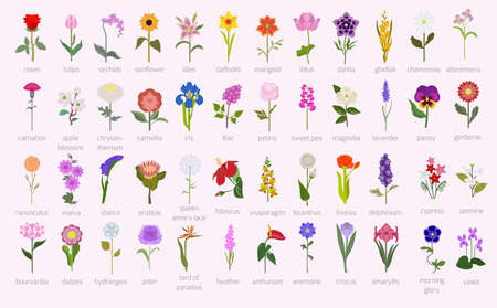 Ilustración de Your garden guide. Top 50 most popular flowers infographic. Vector illustration - Imagen libre de derechos