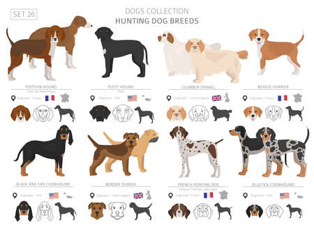 Illustration pour Hunting dogs collection isolated on white. Flat style. Different color and country of origin. Vector illustration - image libre de droit