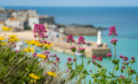 Foto de Pink and yellow flowers in front of defocused bay and beach in St. Ives, Cornwall, England, UK, Europe - Imagen libre de derechos