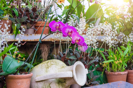 Photo for Orchids flower in clay pots in a tropical wet forest - Royalty Free Image