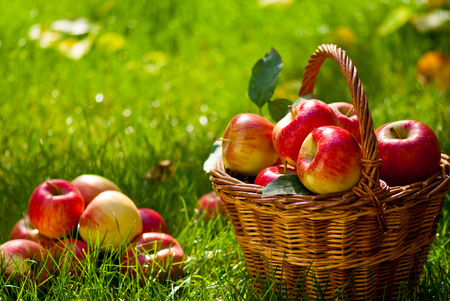 Photo for Red Apples with Wicket Basket in the Grass - Royalty Free Image
