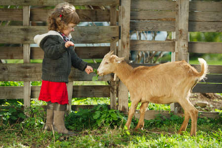 Photo pour cute little girl feeding goat in the garden - image libre de droit