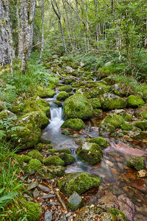 Photo for Green forest with stream in Muniellos biosphere reserve, Asturias. Spain - Royalty Free Image