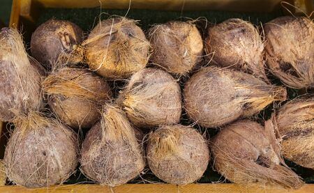 Foto de Pile of ripe coconuts. A tropical fruit, coconuts are known for their versatility of uses, ranging from food to cosmetics. - Imagen libre de derechos