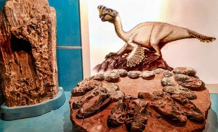 Foto de Valencia, Spain - January 2019: Image of Orviraptor and the dinosaur's nest. - Imagen libre de derechos