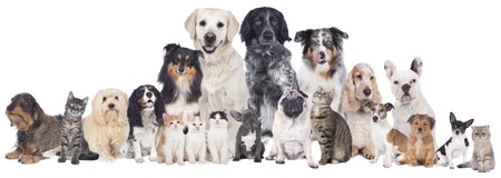 Photo for Big group of pets isolated - Royalty Free Image