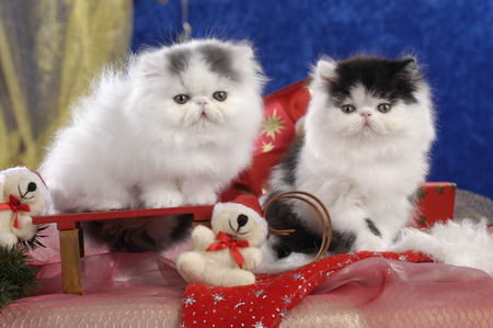 Foto de Two cute kitten in christmas decoration side by side - Imagen libre de derechos
