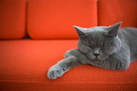 Foto de Cat relaxing on the couch  - Imagen libre de derechos