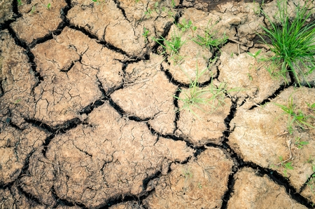 Photo for Natural ground background. Cracked and dried earth with grass. - Royalty Free Image