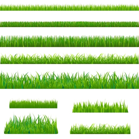 Illustration pour Big Green Grass, Isolated On White Background, Vector Illustration  - image libre de droit