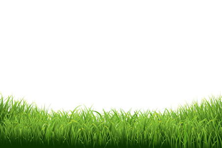 Illustration pour Green Grass Border, Vector Illustration - image libre de droit