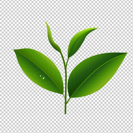 Ilustración de Tea Leaves In Transparent Background Gradient Mesh, Vector Illustration - Imagen libre de derechos