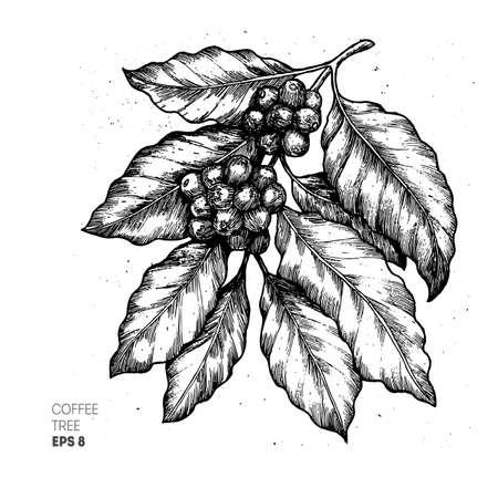 Illustration for Coffee tree illustration. Engraved style illustration. Vintage coffee. Vector illustration - Royalty Free Image