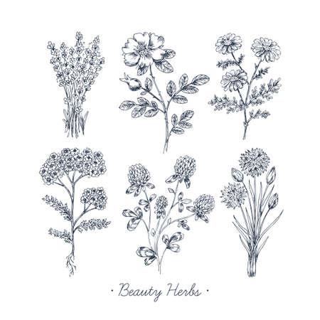 Ilustración de Hand Drawn of Vintage Beauty Herbs Set - Imagen libre de derechos