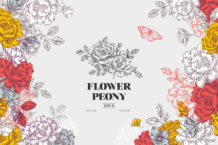 Illustration pour Vintage peony flower background. Flower design template. Vector illustration - image libre de droit