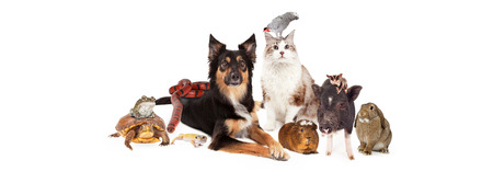 A large group of domestic pets including a dog, cat, bird, guinea pig, pot-bellied pig, sugar glider, bunny, lizard, snake, turtle and frog. Image is sized to fit a social media timeline