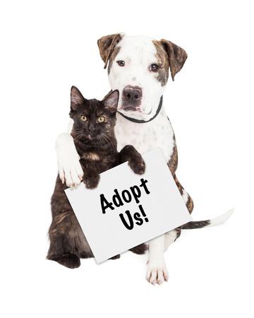 Foto de A cute Pit Bull dog with his arm around a kitten holding an Adopt Me sign - Imagen libre de derechos