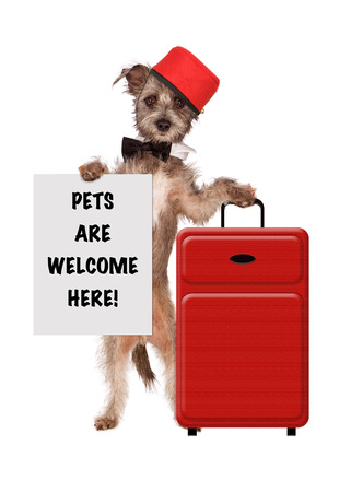 Photo pour A cute dog dressed as a hotel bellhop with a red suitcase holding a sign saying Pets Are Welcome Here - image libre de droit