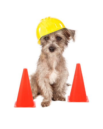 Photo pour A cute dog sitting in front of construction cones wearing a yellow hard hat - image libre de droit