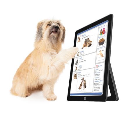 Photo pour A large dog scrolling through a social media website on a tablet device - image libre de droit