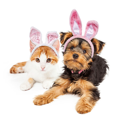 Photo for Cute puppy and kitten laying together wearing pink Easter Bunny ears - Royalty Free Image