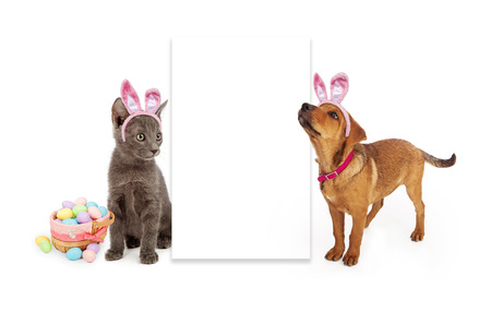 A young kitten and puppy sitting to the side of a blank white sign wearing Easter Bunny ears with a basket of colorful eggs
