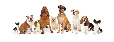 Photo pour A large group of common dogs of different breeds that are various sizes - image libre de droit