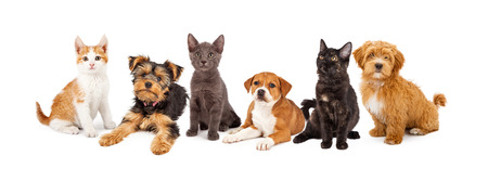 Photo pour A large group of young kittens and puppies together - image libre de droit