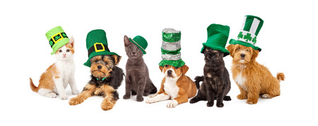 A large group of young kittens and puppies together wearing green St. Patrick's Day hats