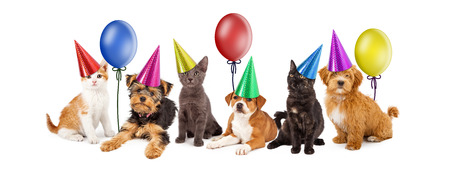 A large group of young kittens and puppies together wearing colorful party hats with balloons