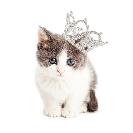 Photo pour Cute little five week old kitten wearing a rhinestone princess crown - image libre de droit