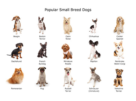 Photo pour A group of fifteen common small breed domestic dogs - image libre de droit