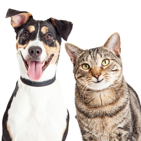 Photo for Closeup of a happy and smiling tabby cat and mixed breed dog looking forward into the camera - Royalty Free Image