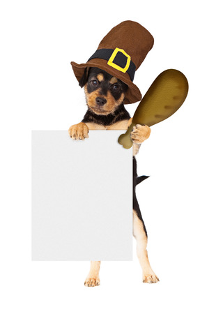 Cute dog wearing Thanksgiving pilgrim hat holding a big turkey leg and a blank sign to enter your marketing message onto
