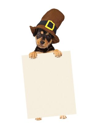 Cute puppy wearing a Thanksgiving pilgrim hat standing up and holding a blank sign to enter your marketing message onto