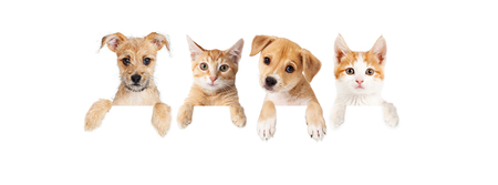 Photo pour Row of cute puppies and kittens with paws hanging over a blank sign. Image sized to fit a popular social media timeline photo placeholder. - image libre de droit