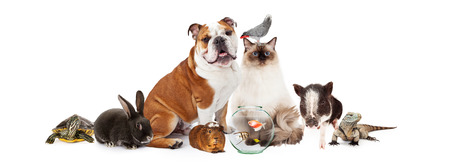 Photo pour Row of popular domestic pets together over white - image libre de droit