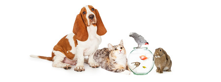 Photo pour Group of domestic pets together including a dog, cat, fish, bird and bunny - image libre de droit