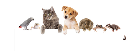 Foto de Row of domestic pets hanging over a blank white banner. Image sized to fit a popular social media banner photo placeholder. - Imagen libre de derechos