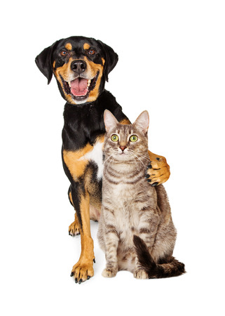 Photo for Funny photo of a happy and smiling cat with arm around a friendly cat - Royalty Free Image