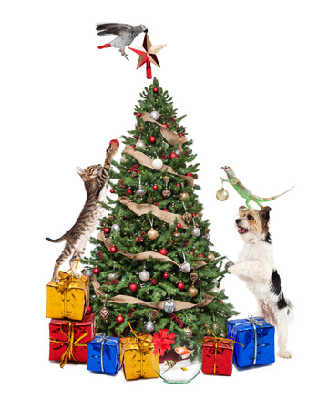 Funny photo of pets decorating a Christmas tree together