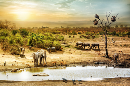 Photo pour Dreamy scene of common South African safari wildlife animals together at sunset - image libre de droit