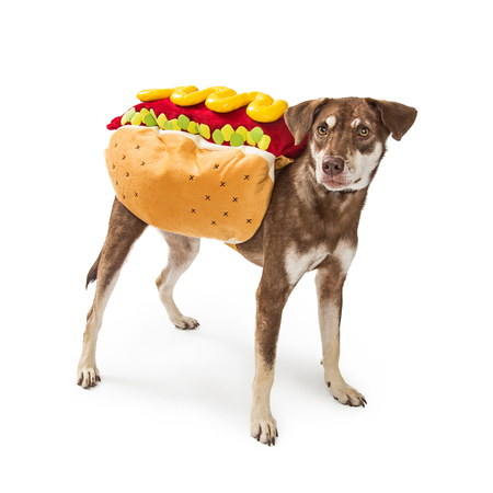Photo for Funny photo of a dog wearing a hot dog Halloween costume - Royalty Free Image