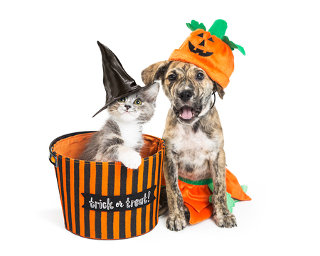 Photo for Funny puppy and kitten in Halloween costumes with trick-or-treat basket - Royalty Free Image