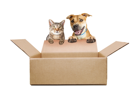 Foto de Happy and smilig dog and cat opening a cardboard shipping box. Empty contents so you can add your products in - Imagen libre de derechos