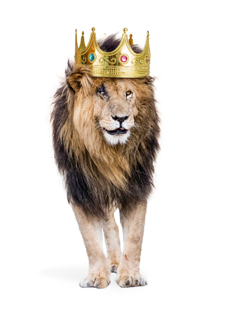 Photo pour Conceptual photo of male lion with battle scars wearing a king of the jungle crown. Isolated on white.  - image libre de droit