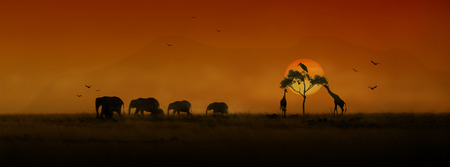 Photo for Website or social media banner with silhouettes of a herd of African elephants giraffes and birds with a golden orange sunset - Royalty Free Image